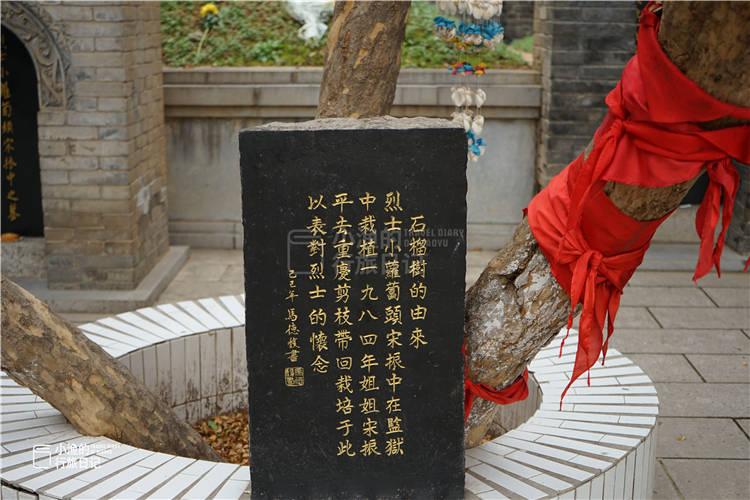 冬游西安:小萝卜头墓前的石榴树长大了,有人挂了一个风铃