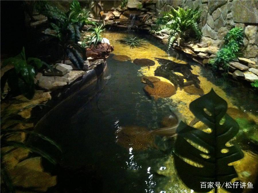 任性土豪在地下室建的观景鱼池,这改造让人服气!