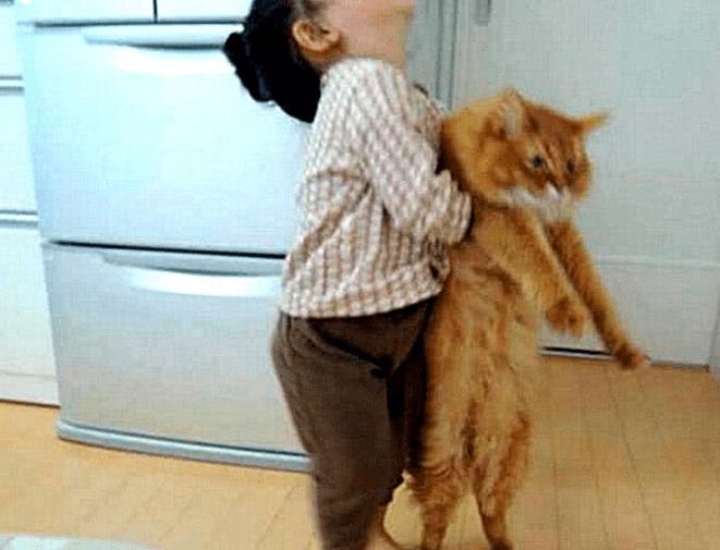 主人养只橘猫陪女儿一起长大,一年后发现,橘猫胖的遥遥领先