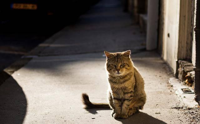 """与自己的爱猫相遇,欧拉黑猫喊你一起收养""""萌宠""""了"""