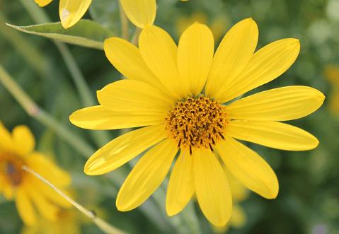 心理测试:四朵花,你会选哪一朵?一秒测出你今年会有什么收获