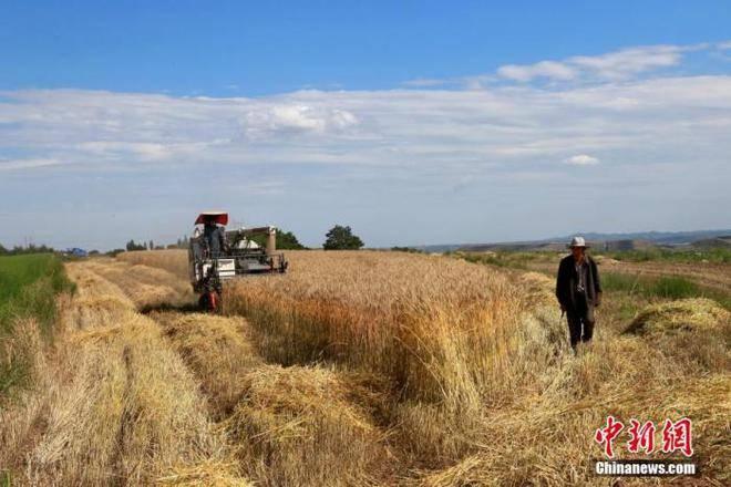 """中国的粮食安全状况如何?官方:""""省吃""""够吃一年"""