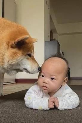 给小婴儿盖被子,毛孩吃醋抢占被角:谁还不是个宝宝了