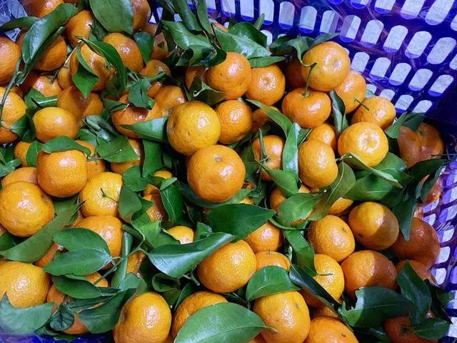 当初买糖橙的时候,看到这四种糖橙掉头就走。水果商:这个人是专家