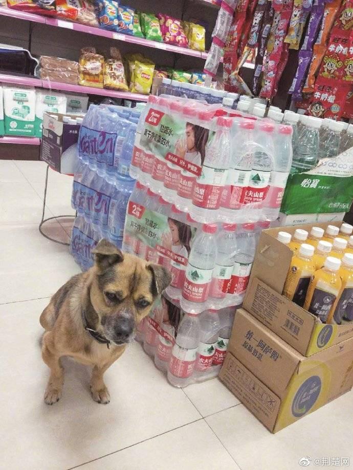 武汉忠犬八公蹲守医院3个月 目前已有两人申请领养
