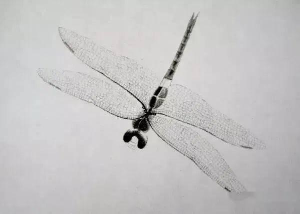 八雅轩丨 白石老人这是在画蜻蜓吗 这是在照相啊