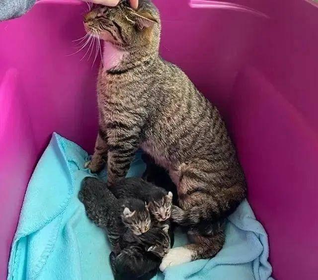 """【猫咪】带回去让家猫照顾,猫咪""""喜当爹""""一脸不情愿,女子捡到一窝猫"""