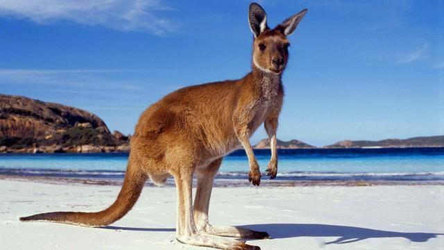 两面不讨好:澳是美国最忠诚的军事盟友,但白宫照样欺负它