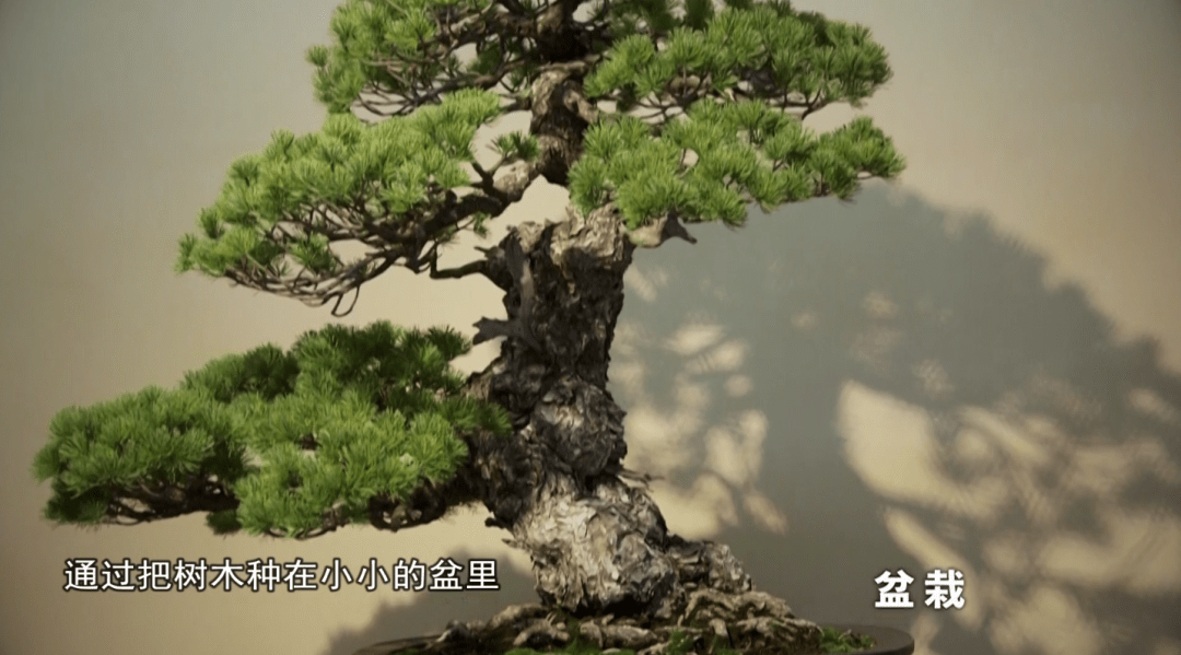 知日 盆中的高山流水,指尖上的自然风光图片