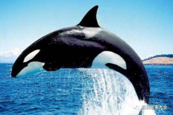 全球十大智商最高的动物排行榜:海豚、猪上榜
