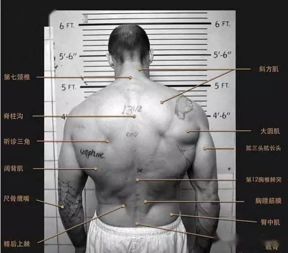 有一种背,叫杰森斯坦森的背! 锻炼方法 第10张