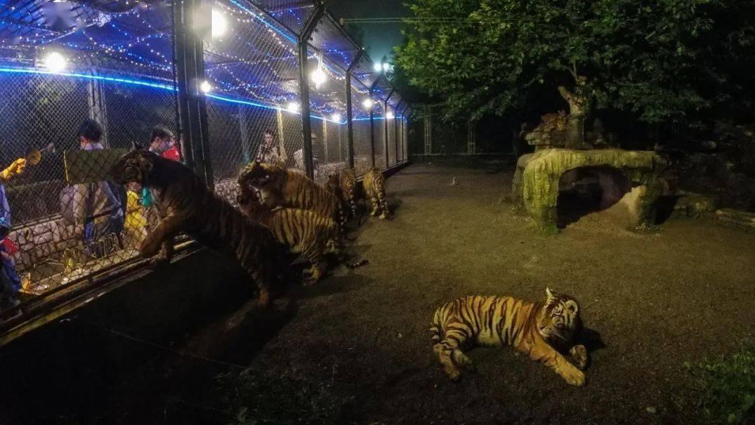 """上海野生动物园""""动物园奇妙夜""""火热启动!!"""