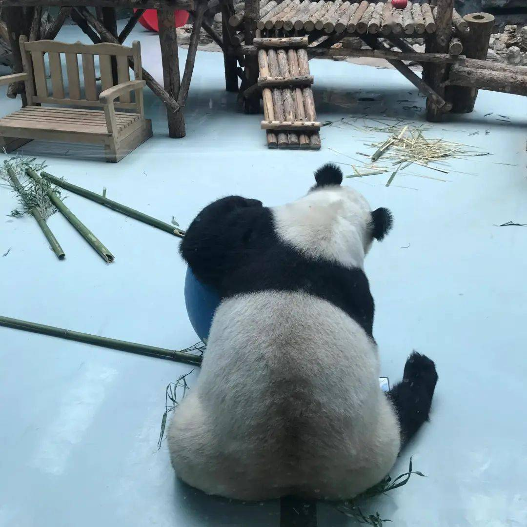 这周末去大青山野生动物园看猛兽呀~