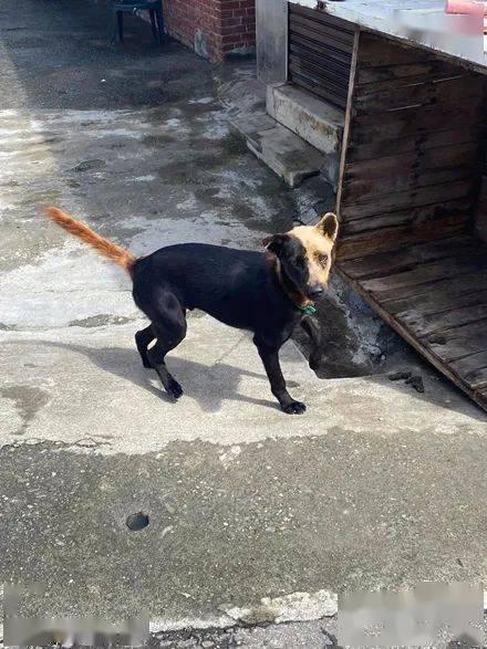 小哥送快递到网友家,效果一打开门看到狗子的容貌,瞬间笑喷了!