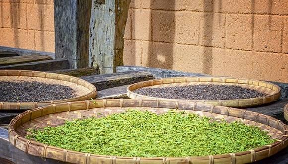 IPO雷达| 中国茶叶、澜沧古茶争夺茶叶第一股,为何普洱茶售价越拉越大?
