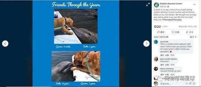 金毛与海豚相恋7年却因疫情离开,现在重逢让所有人感动!