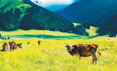 牧民跳马草原生态改善 中国最大游牧民族