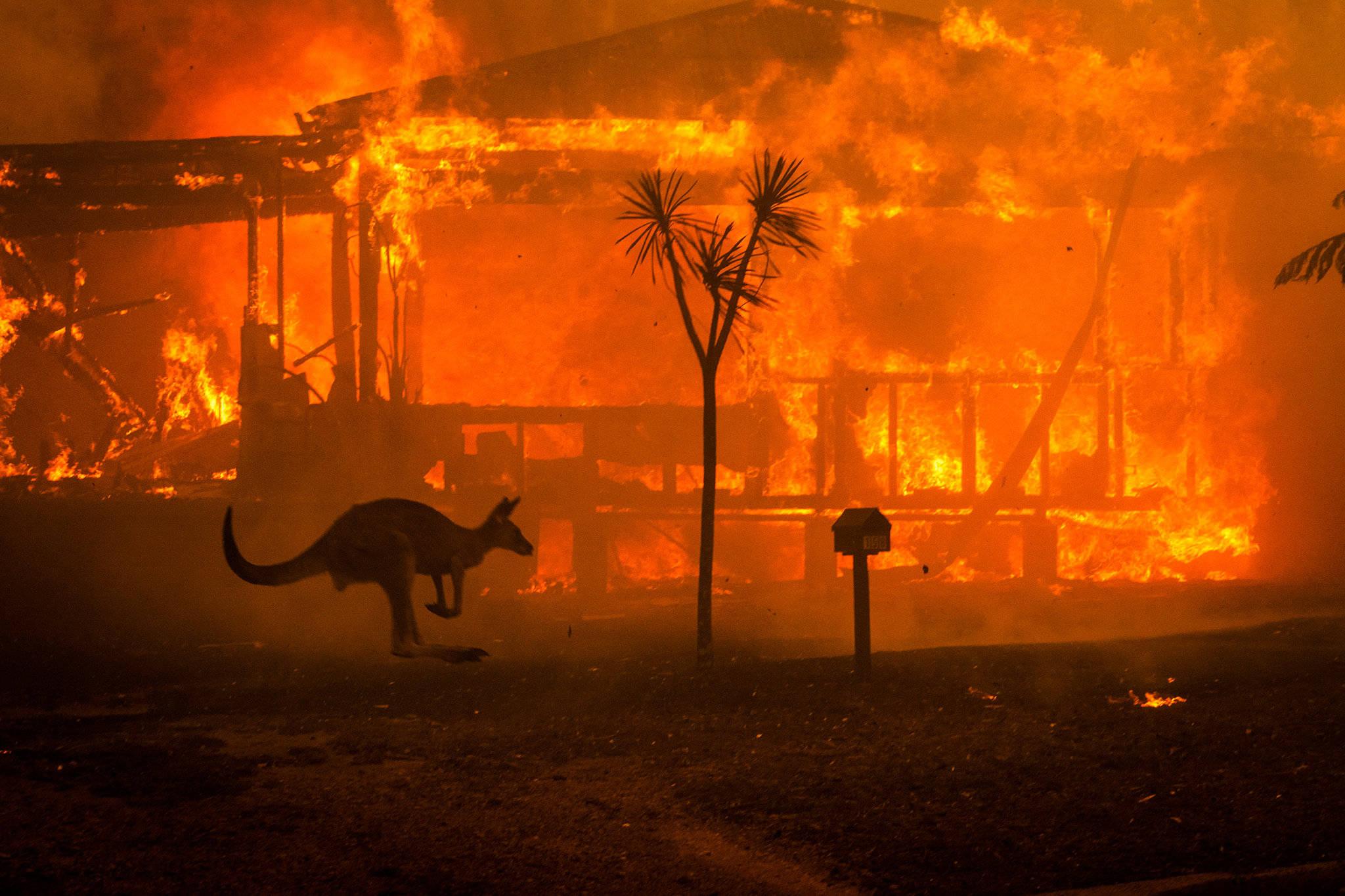 世界自然基金会:澳大利亚山火致30亿动物丧生或失去栖息地
