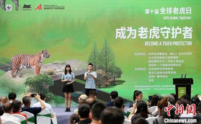 台商协会专家:中国野生虎数量走出低谷