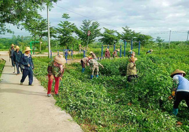 儋州王五镇:清理病媒生物孳生地84处 垃圾39吨
