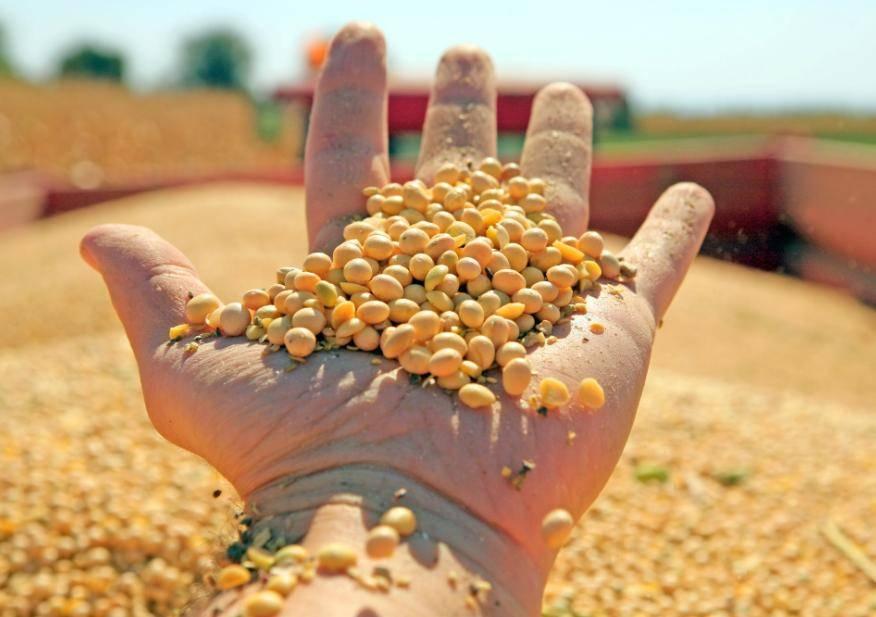 中国为何非要买美国粮食?8月158船大豆运往中国 到港量近千万吨