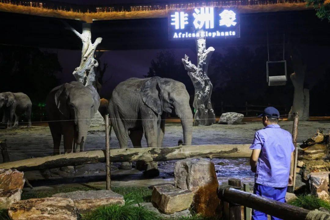 """""""动物园奇妙夜""""进入倒计时!再不来玩就要错过啦!"""