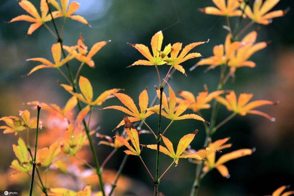 江苏淮安古老的黄河湿地在秋天呈现出不