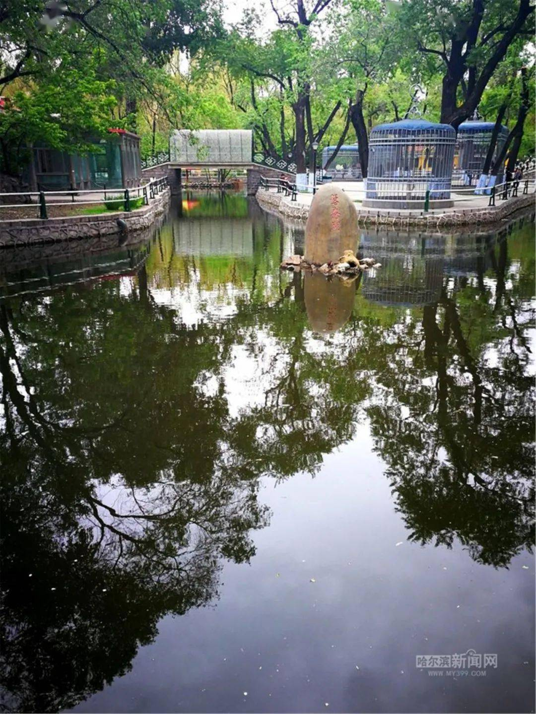 收藏冰城一夏·密码篇|哈尔滨的夏天密码,都藏在这几个字里了!