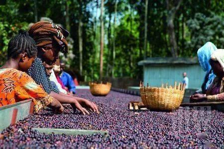 你知道人工添加咖啡的危害吗? 防坑必看 第4张