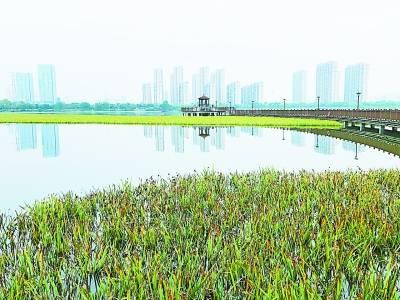 啟動生態修復11個月后 楊春湖恢復水體功能
