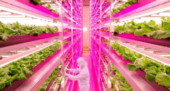 垂直农业规模的13种前沿种菜模式,值得相识!