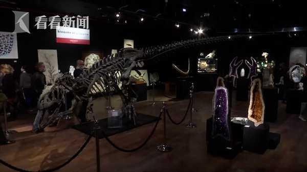 重返侏罗纪!法国将拍卖异特龙化石 估价近千万