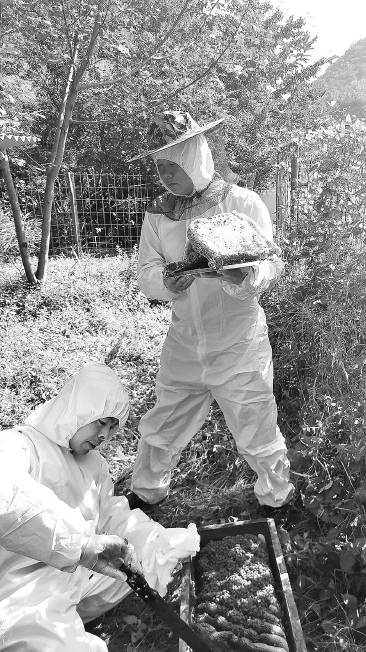 """陜西留壩:  """"古法養蜂""""非物質文化遺產助力精準扶貧"""