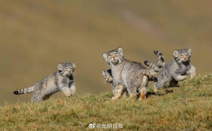 青海摄影师作品获世界野生生物摄影大奖