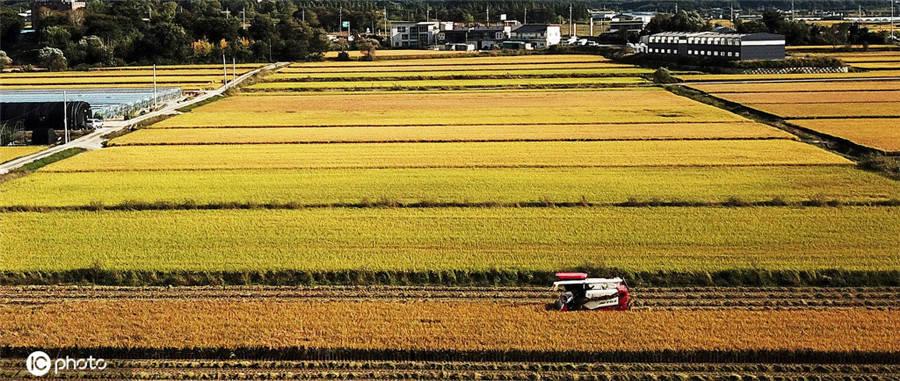 世界粮食日看到所有国家的丰收充满喜悦