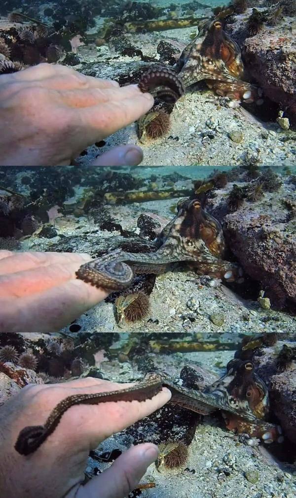 我的章鱼老师-6