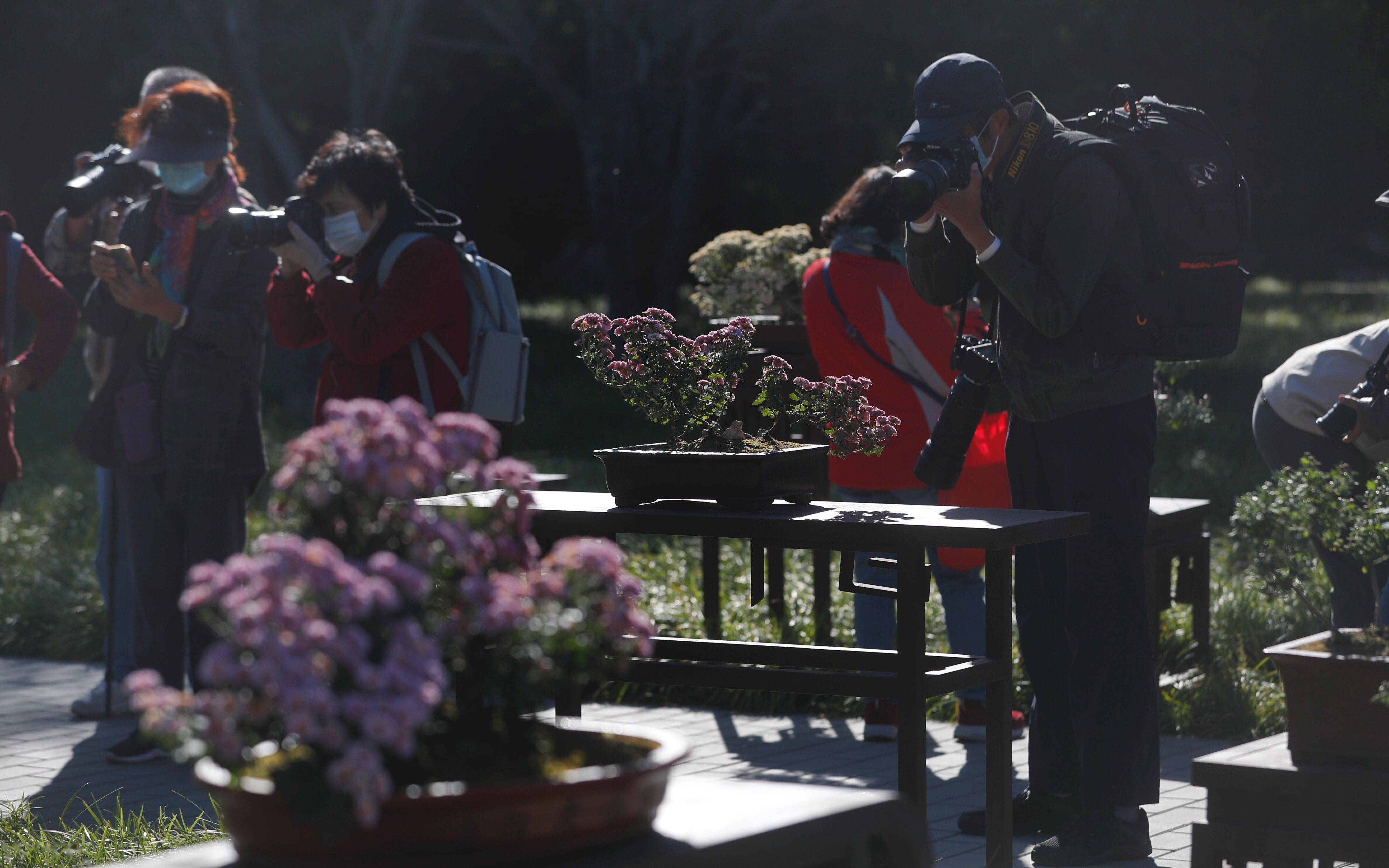 北京市菊花展今日在北海公园开幕 将连