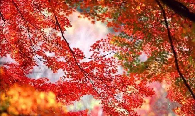 穿越秦岭:国家中央公园的秋天,这几条国道秋色无边,美到爆!