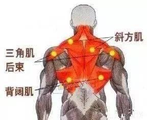 别再说练背没感觉,用这个动作激活你的背阔肌,男女通用!