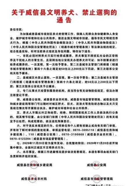 云南一地发通告:城区禁止遛狗,违反三次捕杀