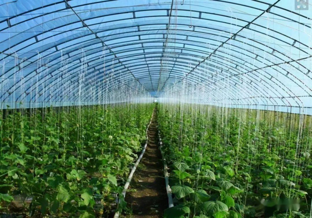 冬暖式蔬菜大棚