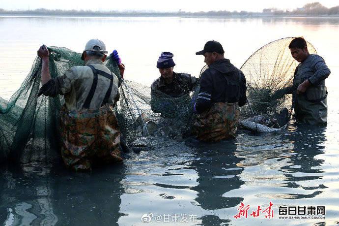 临泽:生态放养 鱼丰人欢