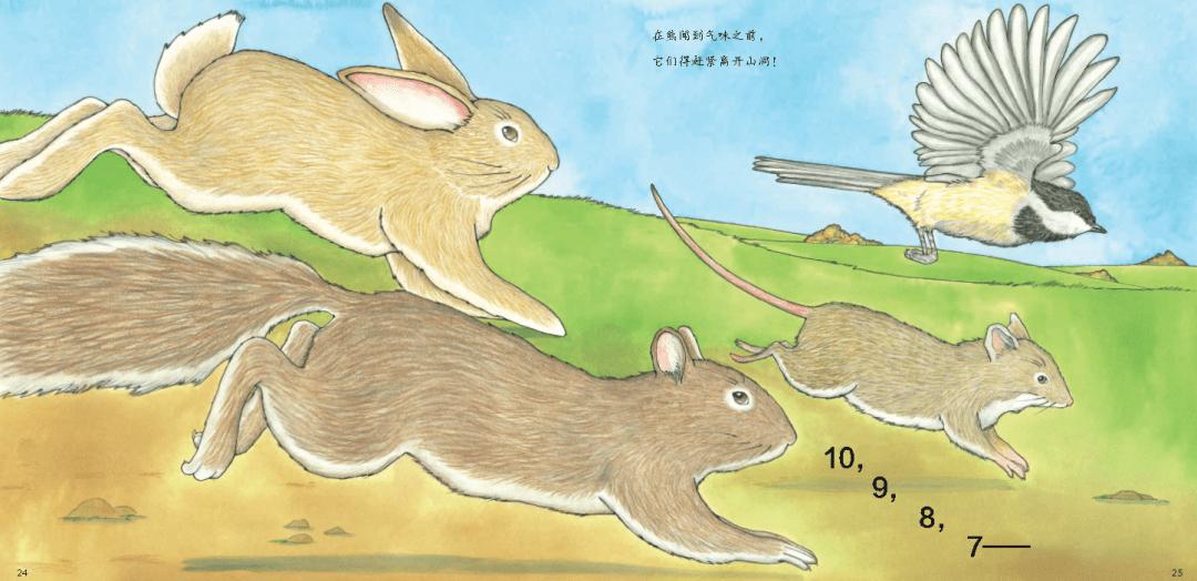 动物温情绘本,引领孩子进行一趟充满思考的晚安之旅