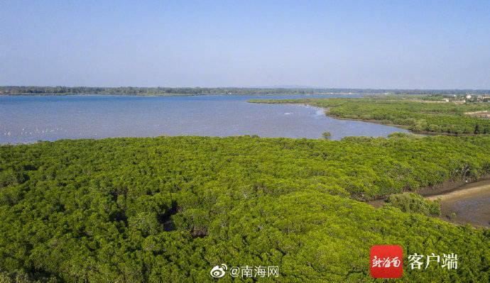 红树成林!海南新盈红树林国家湿地候鸟成群