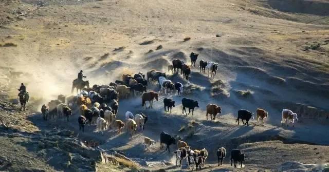 萨克斯可可托海牧羊人口琴_萨克斯可可托海牧羊人