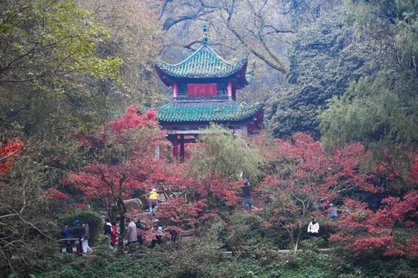 红枫扮靓岳麓山