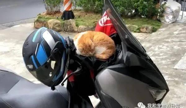 车刚停好就有猫猫光顾,近看秒融化:被宠幸了!