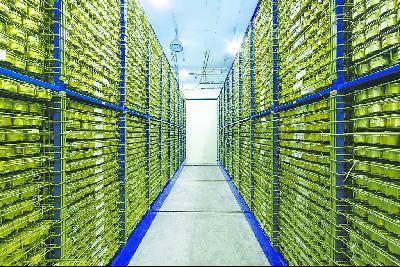 探访中国最大种子库:保存粮棉油果蔬等340种作物  第2张