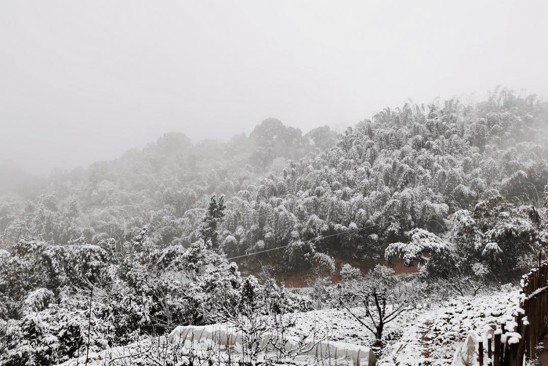 美翻了!雪后的合江金龙湖、玉兰山,美得像童话世界……