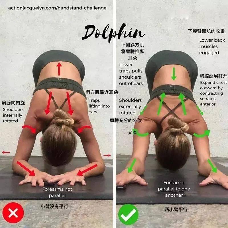 海豚式:瑜伽倒立的基础体式!